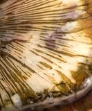 Scales of a carp as a background. macro.  Stock Photo