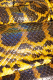 Scales detail of Yellow Anaconda Royalty Free Stock Images
