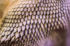 Scales of a Dragon. This is a picture of the scales on my bearded dragon`s chin. I took a macro image to show the texture and the pattern of the scales stock images