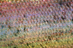 Scales of fish close up. Fish scales background stock photo