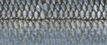 Scales of fish Royalty Free Stock Photography