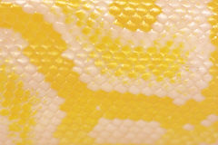 Scales of a golden python Royalty Free Stock Photos