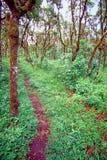 Scalesia Forest Santa Cruz Galapagos royalty free stock photo