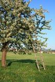 Scaletta con la mela Fotografia Stock Libera da Diritti