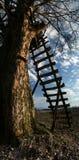 Scaletta di legno Immagini Stock