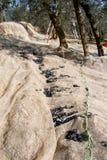 Scaletta sopra le olive che raccolgono rete fotografia stock