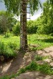 Scaletta su un albero di betulla Immagini Stock