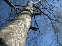 Scali l'albero fotografia stock