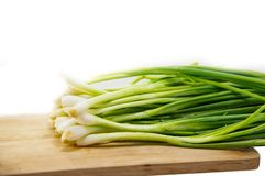 Scallion green onion spring onion salad onion bundle whole root isolated on white background stock photography