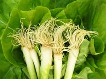 Scallion green spring onion and lettuce Stock Photo