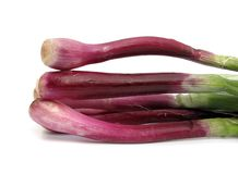 Scallion purple spring onion Stock Images