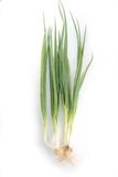 Scallion or spring onion. The scallion or spring onion stock photography