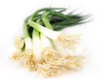 Scallions Royalty Free Stock Image