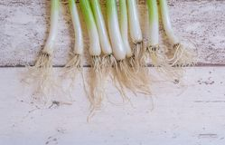 Scallions. Fresh spring onions also known as scallions on dark background Royalty Free Stock Image