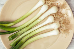Scallions on the plate, healthy food, close up Stock Images