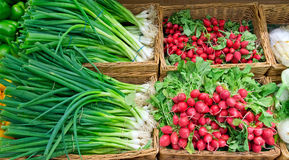 Scallions and radish Royalty Free Stock Photo
