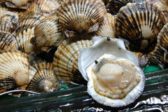 продукты моря scallop Стоковые Фото