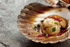 Scallop. Single grilled sea scallop in its shell, over stone background stock photo
