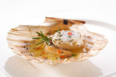 Scallop. Fresh grilled scallop on white plate close up stock photo