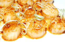 Scallop Stock Photo