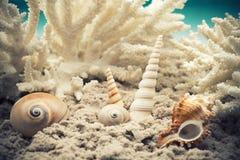 scallop Стоковые Изображения