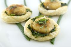 Scallop appetizer Stock Image