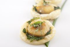 Scallop appetizer Royalty Free Stock Image