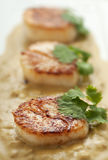 Scallop Appetizer Royalty Free Stock Images
