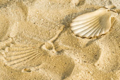 Scallop at a beach Stock Image