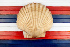 Scallop. Stock Photography