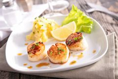 Scallop Royalty Free Stock Images