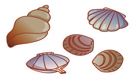 Scallop and  conch Royalty Free Stock Image