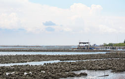 Scallop farm seascape Royalty Free Stock Image