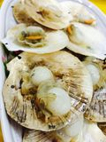 Scallop fried with garlic and butter. A recommend menu of Thai seafood, eat with spicy and sour sauce, a famous Thai dish at seaside e.g. Pattaya, Huahin, Cha-am royalty free stock image