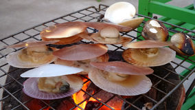 Scallop grill on stove Stock Photography