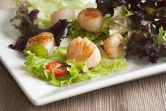 Scallop and leaf salad Royalty Free Stock Images