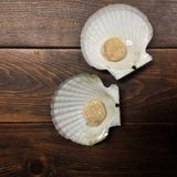 Scallop meat is in the shell on a dark wood table royalty free stock photos