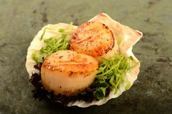 Scallop. A pair of grilled scallop table top food shot royalty free stock image