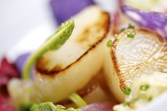 Scallop. Royalty Free Stock Photo