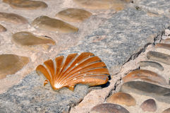 Scallop on the road no.1. Symbol of a scallop as road sign Royalty Free Stock Photo