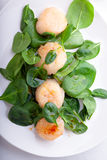 Scallop Salad with greenery Stock Image