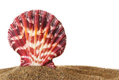 Scallop on Sand Royalty Free Stock Image