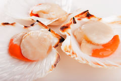 Scallop Stock Image