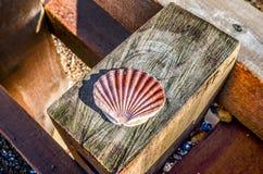 Scallop sea shell on wood Stock Photo