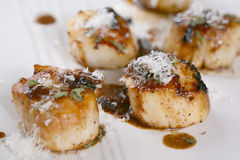 Scallop seafood appetizer Royalty Free Stock Images