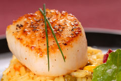 Scallop Seared em uma cama do arroz do aç6frão Fotos de Stock Royalty Free