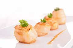 Scallop Royalty Free Stock Photos