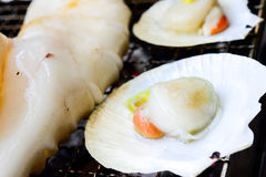 Scallop seashell on the grill with flames closeup Royalty Free Stock Images