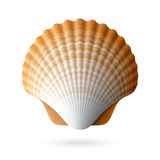 Scallop seashell vector illustration
