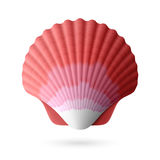 Scallop seashell Royalty Free Stock Photos